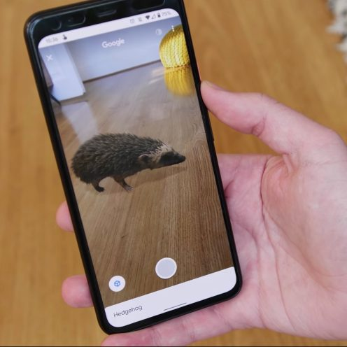 augmented reality hedgehog on phone